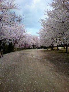Sakurakaido