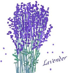 Lavender_4