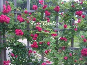 Rosegardentitle
