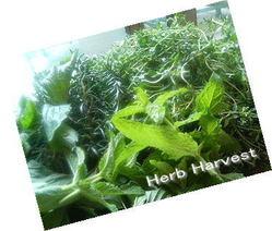 Herbharvest